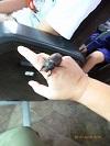 2.途中のSAで観つけたカブトムシA