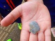 10 (1)貝の化石