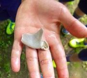 10 (2)貝の化石